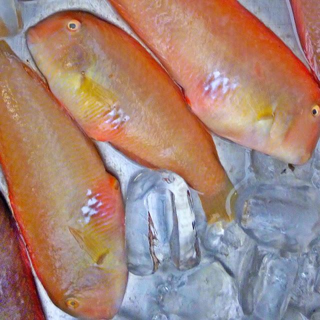 Aegina's delicious local fish! Κατσουλα η Αιγινητικη!
